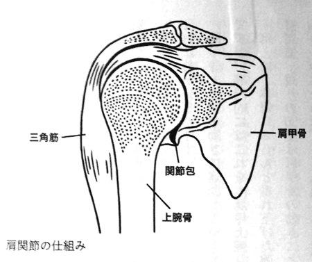 肩関節の仕組み 第4章 P111