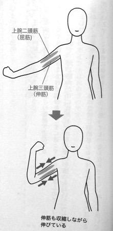 屈筋と伸筋 Chapter1P35