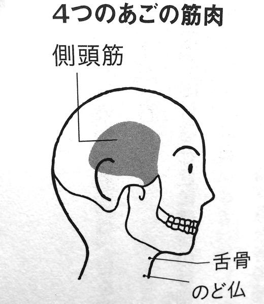 4つのあごの筋肉① 第1章P43