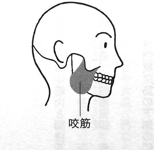 4つのあごの筋肉② 第1章P43