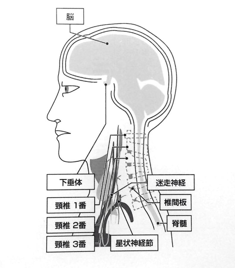 迷走神経と星状神経節 ★1 第1章