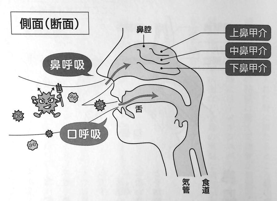 鼻の中の側面図 第2章P63