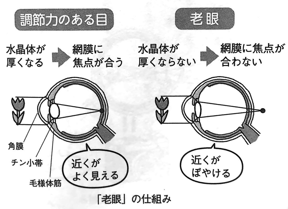 図2 老眼 の仕組み PART1P20