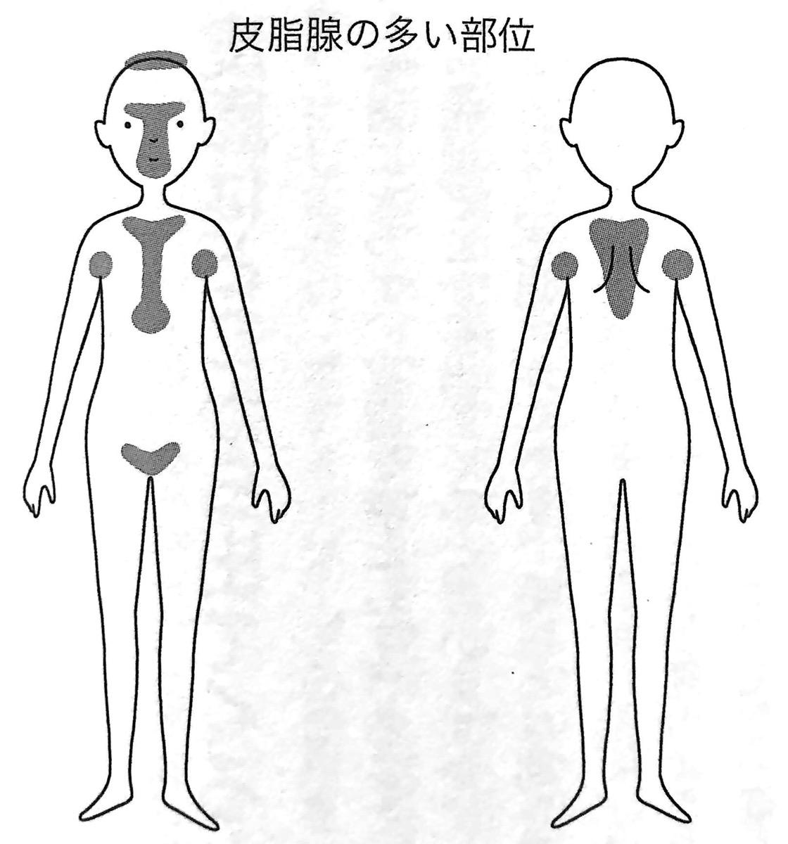 図1 皮脂腺の多い部分 お湯だけ洗い であなたの肌がよみがえる 第1章