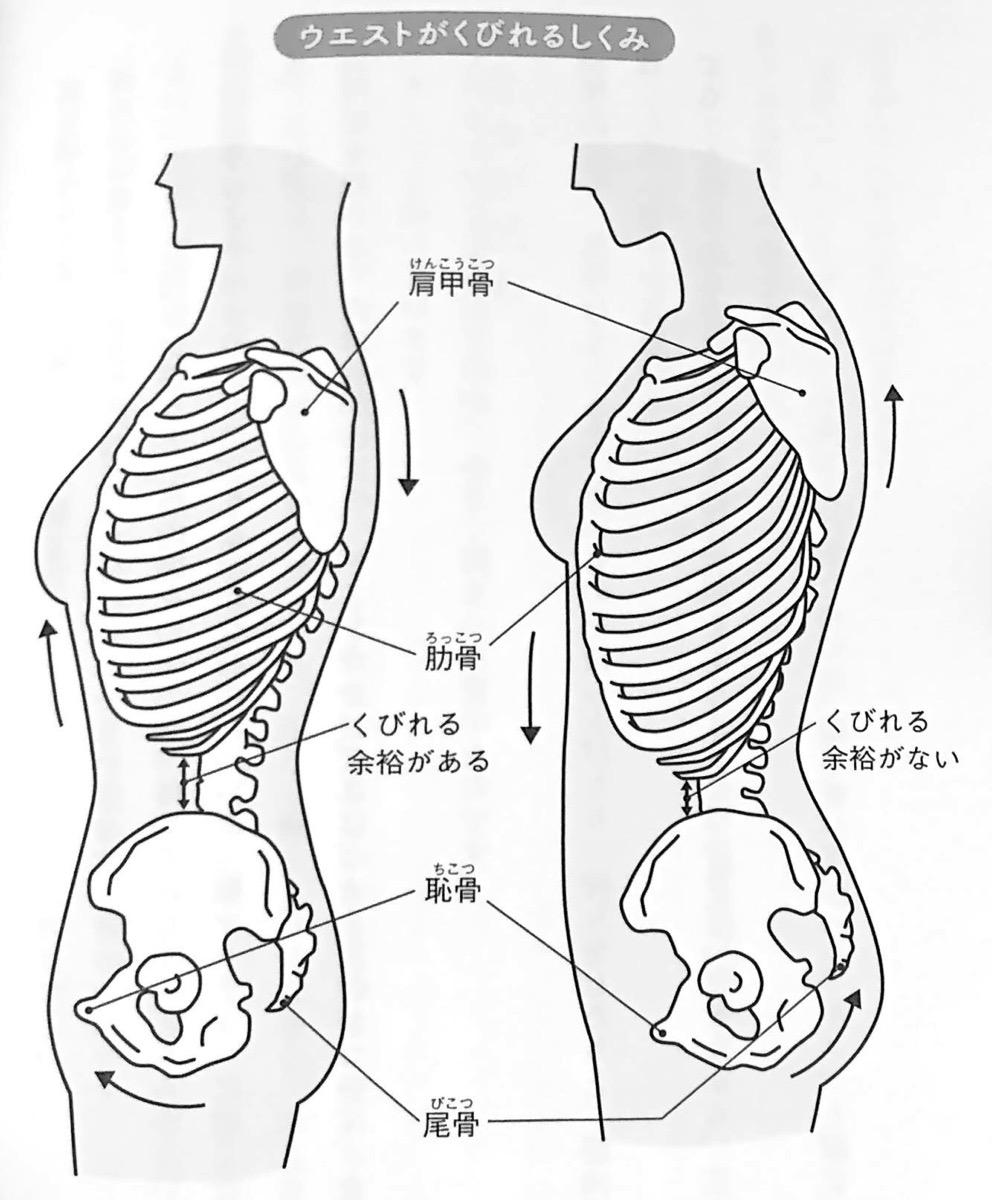 図6 ウエストがくびれるしくみ すべては股関節から 第4章