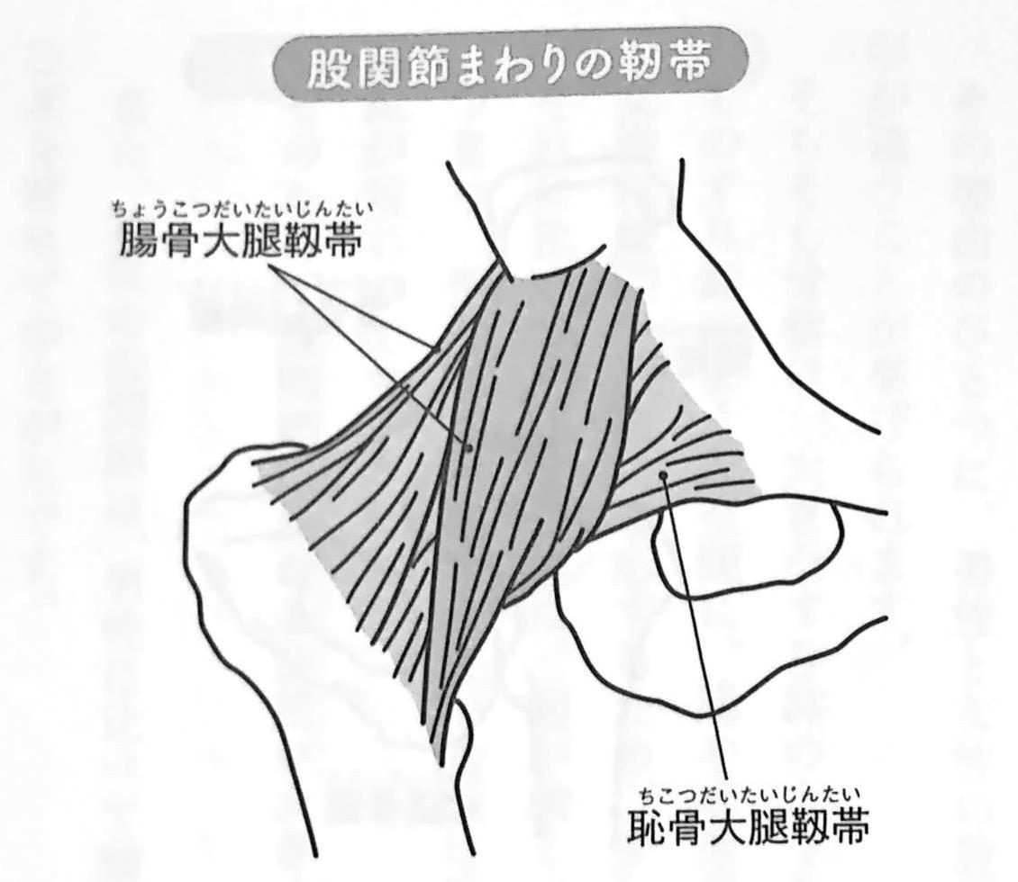 図3 股関節まわりの靭帯 すべては股関節から 2章
