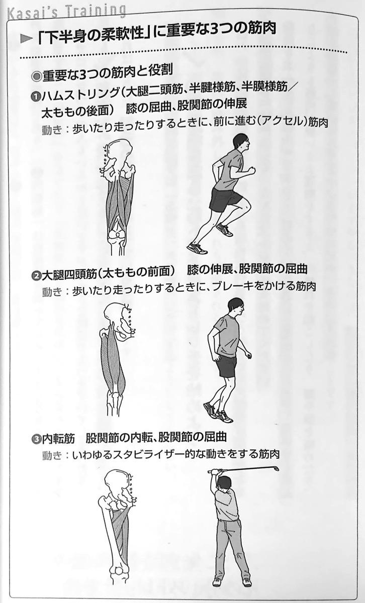 図2 下半身の柔軟性 に重要な3つの筋肉 疲れない体 と 折れない心 第1章