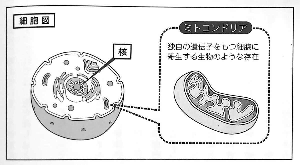 図1 細胞図 超日本史 第1章
