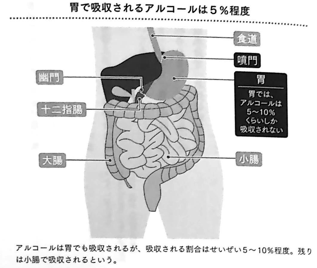 図1 胃で吸収されるアルコールは5 程度 最高の飲み方 第4章