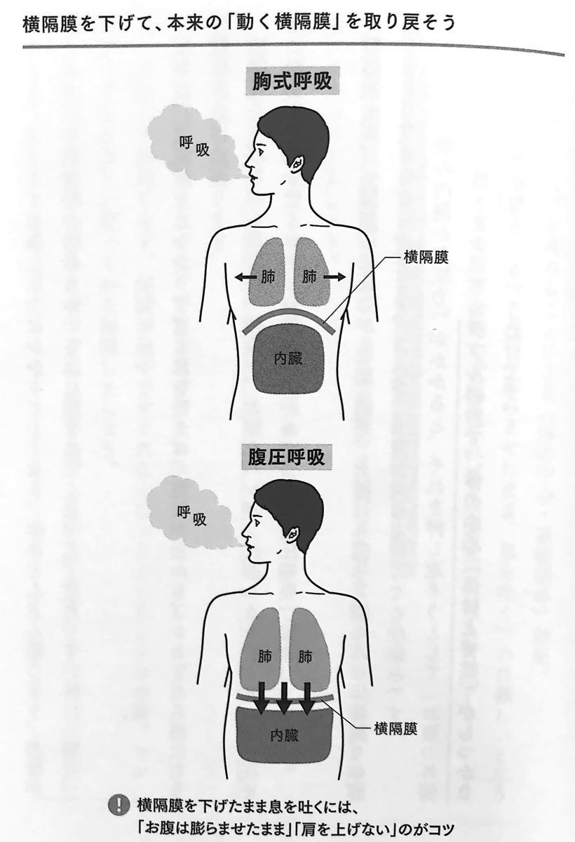 図2 横隔膜を下げて 本来の 動く横隔膜 を取り戻そう 疲れない体 1章