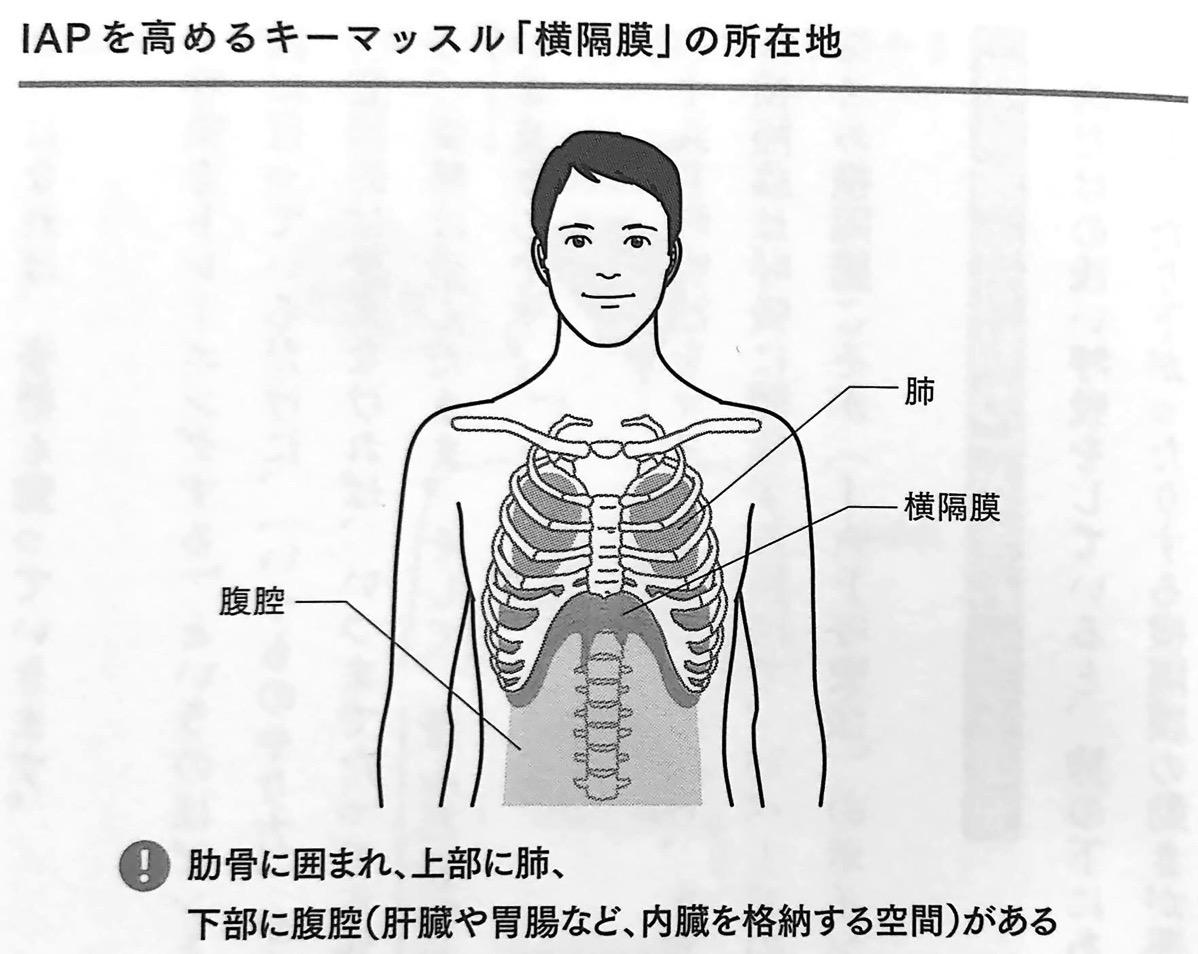 図1 IAPを高めるキーマッスル 横隔膜 の所在地 疲れない体 1章