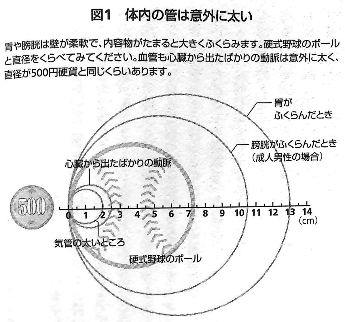 図1 体内の管は意外に太い 胃腸を最速で強くする 第1章