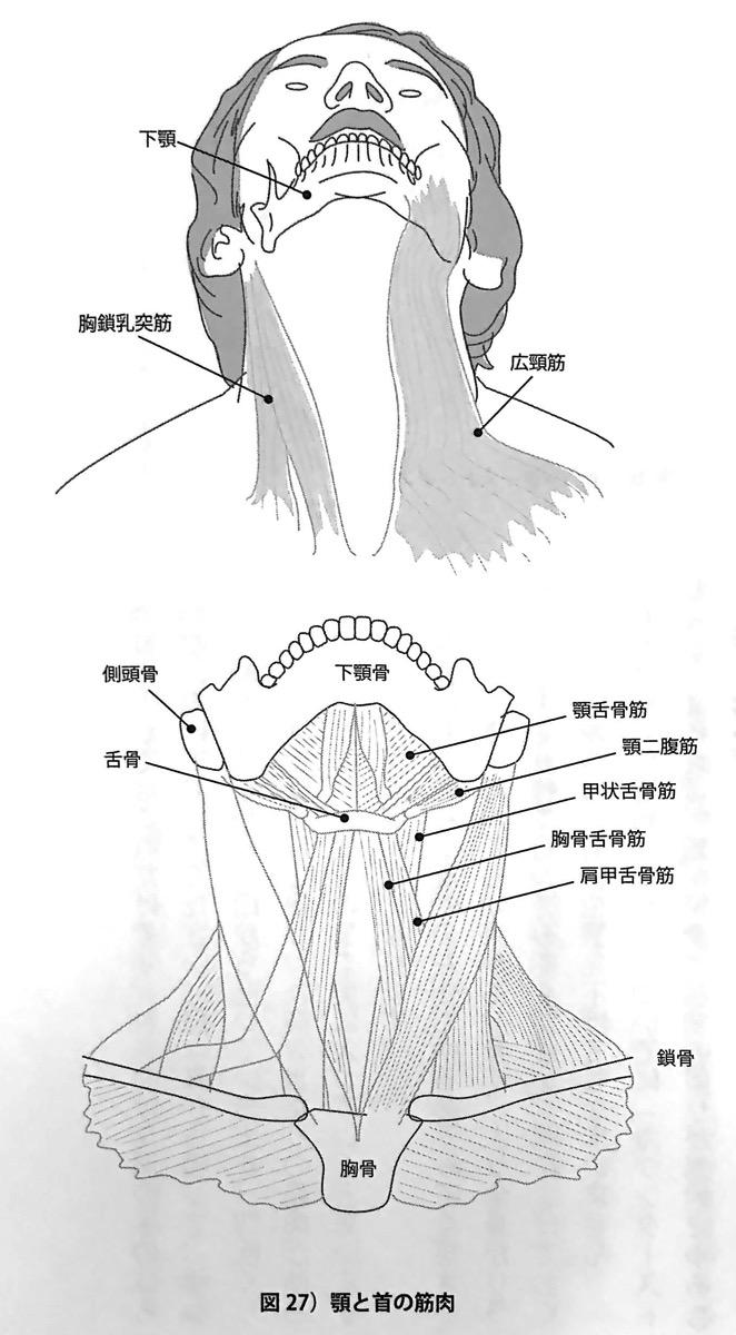 図27 顎と首の筋肉 輪ゴム一本で 03