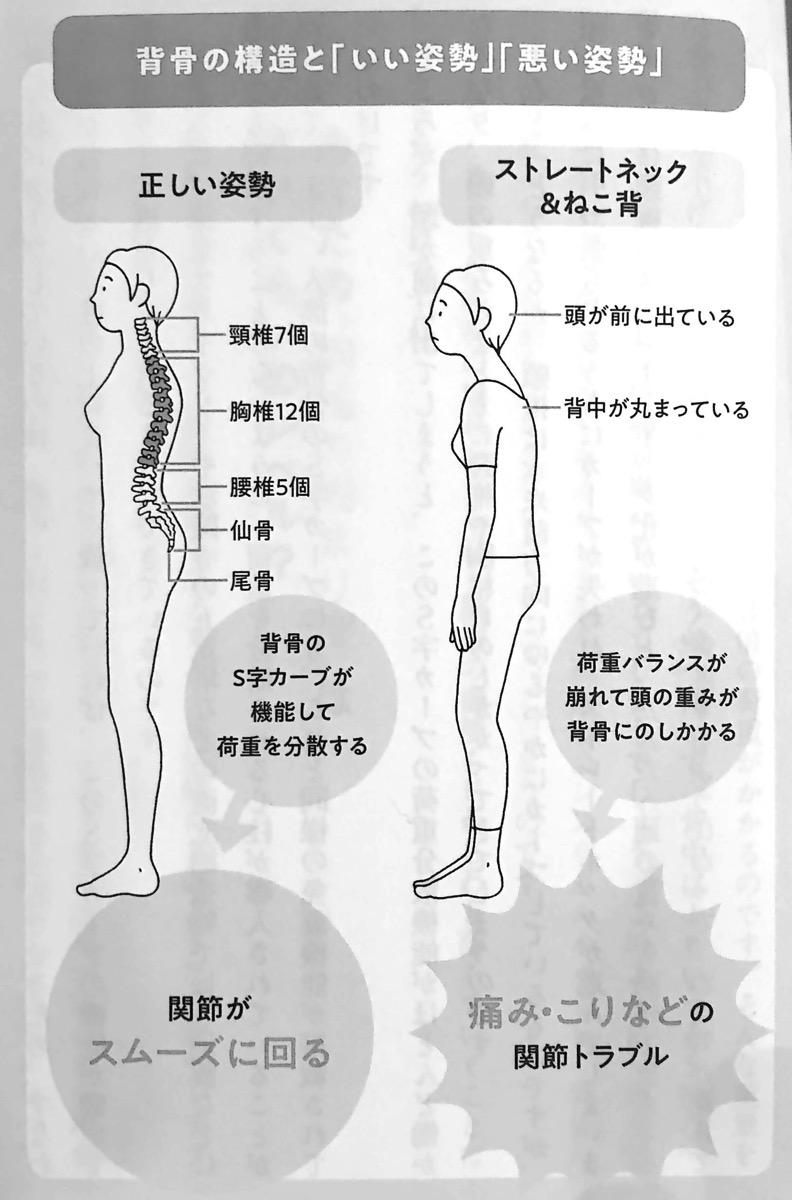 図2 背骨の構造と いい姿勢 悪い姿勢 10秒胸椎のばし Part1