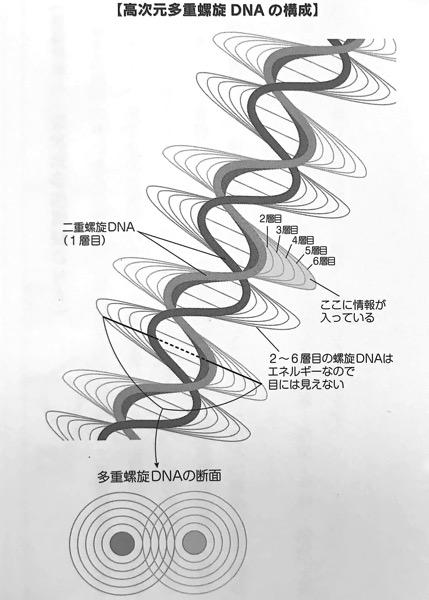図1 高次元多重螺旋 DNAの構成 令和のDNA Part2