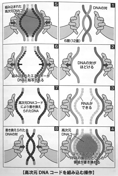図5 高次元DNAコードを組み込む操作 令和のDNA Part3