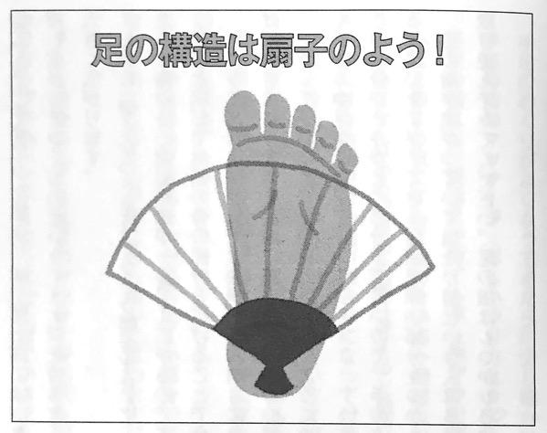 図2 足の構造は扇子のよう 関節の可動域を広げる本 第2章