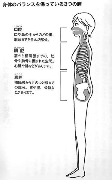 図3 身体のバランスを保っている3つの腔 長生きしたければ 運動をやめなさい 第2章
