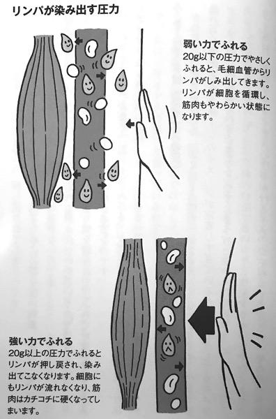 図5 リンパが染み出す圧力 長生きしたければ 運動はやめなさい 第6章