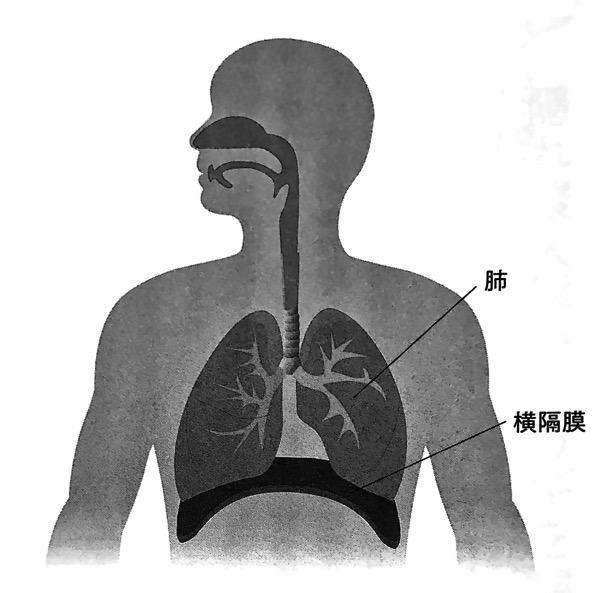 図1 横隔膜と肺 横隔膜ほぐし 第1章