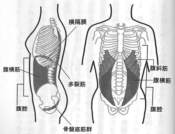 図7 腹腔を構成する筋肉群 横隔膜ほぐし 第4章