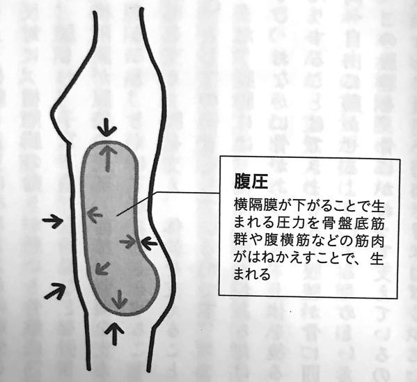 図8 横隔膜の動きと腹圧の関係 横隔膜ほぐし 第4章
